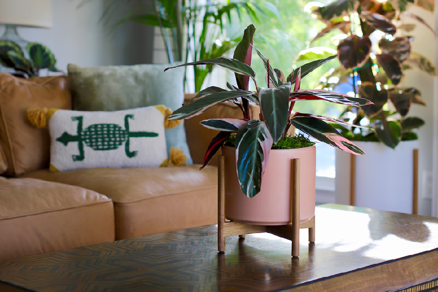 The perfect housewarming gift – 6 ideal indoor flowering plants