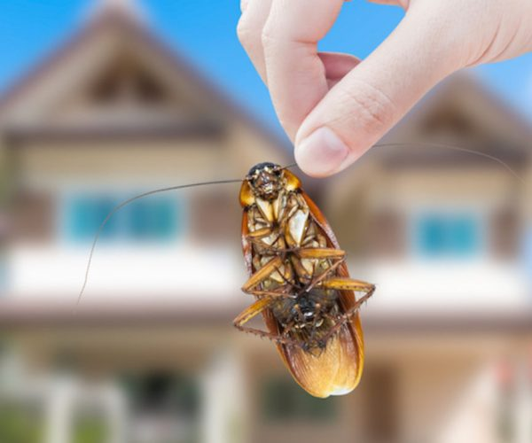 How to Keep Pests Away from Your Home